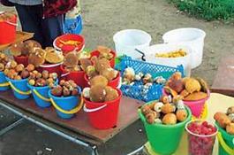 Продажа дикорастущих грибов в столице Украины запрещена уже девять лет, но стихийная торговля ими процветает