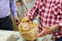 В пригороде Новороссийска местный житель Михаил Тыщенко нашел гигантский гриб, вес которого составляет 3 килограмма