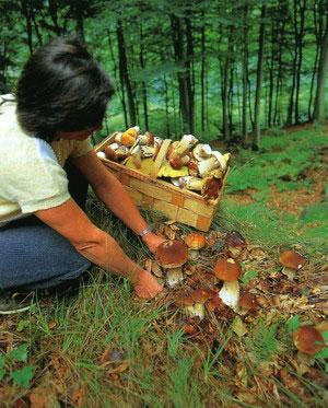 Места, где растут грибы