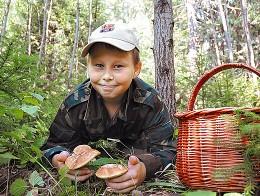 Правила «тихой охоты». Неизвестные факты о съедобных и ядовитых грибах