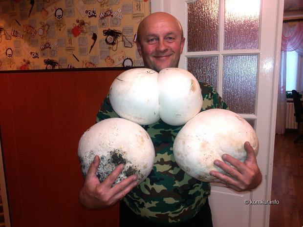 Гигантские грибы нашел пенсионер в кличевском лесу