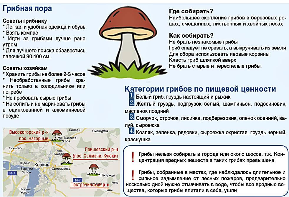 Казань: карта грибника