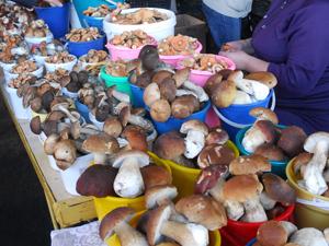 На рынке кучка грибов стоит от 50 рублей