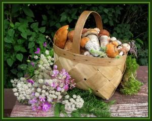 В лесах под Минском уже собирают боровики и лисички