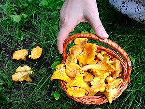 Десятка грибных мест Самарской области